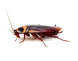Pest Control Totton